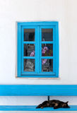 Sleeping cat on a bench in front of a Greek, blue window Stock Photos