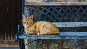 Sleeping Cat on a Bench. Sweet sleeping Cat on a brown Bench Stock Photography