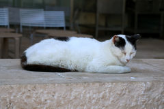 Sleeping Cat. Black and white cat sleeping on the street. Selective focus stock photos