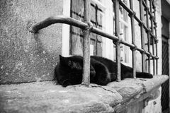 The sleeping cat. Black cat sleeping on a window sill, Florence, Italy stock photo