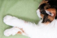 Sleeping cat on blanket Stock Photo