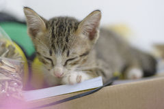 Sleeping cat. Cat is sleeping on the box Royalty Free Stock Images