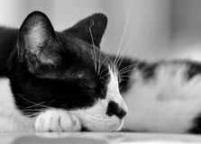 Sleeping Cat. A cat sleeping on a car roof Stock Photography