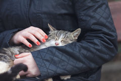 Sleeping cat. She caresses the sleeping cat Royalty Free Stock Images