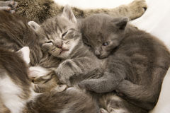 Sleeping cat children Stock Photo