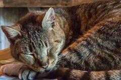 Sleeping Cat Close Up Stock Images