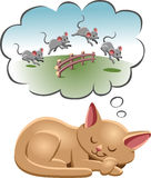 Sleeping cat. A cat counting the sheep to fall asleep Royalty Free Stock Images