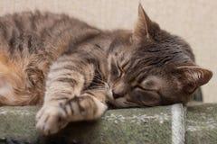 Sleeping cat Royalty Free Stock Image