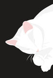 Sleeping cat. Cute sleeping white cat with a pink nose Royalty Free Stock Photos