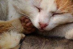 Sleeping cat. Detail sleeping cat with pink nose Stock Photos