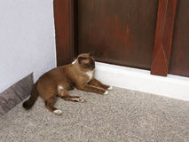 Sleeping cat at door of house Royalty Free Stock Images