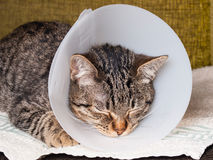 Sleeping cat with an Elizabethan collar. Inside home Stock Photos