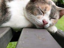 Sleeping cat face closeup Royalty Free Stock Images