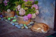 Sleeping cat beside the flowers Royalty Free Stock Images