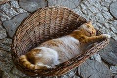 Sleeping cat Royalty Free Stock Photography