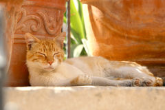 Sleeping Cat. Ginger and white cat sleeping in the garden. Selective focus royalty free stock image