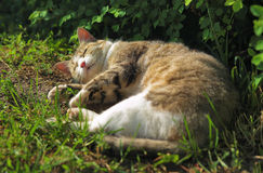 Sleeping cat in the grass Stock Image