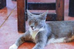 Sleeping cat. A sleeping gray cat in Israel Stock Photos