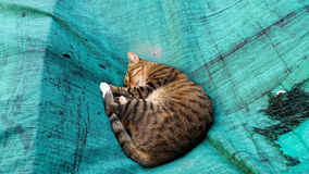 Sleeping Cat on Green Canvas Royalty Free Stock Images