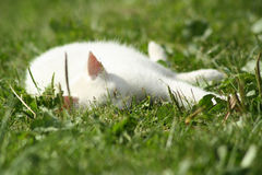 Sleeping cat. The cat sleeping in the green grass stock photos