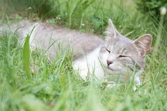 Sleeping cat in the green grass. Sleeping cat in green grass in the garden in summer Stock Images