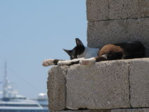 Sleeping cat in a harbor wall Stock Photography
