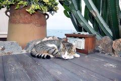 Sleeping cat harbour hafen cactus sea. Taken in fuerteventura corralejo in winter 2015 Stock Photo