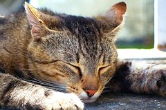 Sleeping cat after a hearty meal. It`s called LOLA. royalty free stock photography