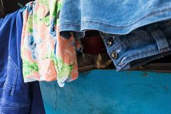 Sleeping Cat hiding from people in calm place and napping. Behind clothes. Pet in Sri Lanka Royalty Free Stock Photography