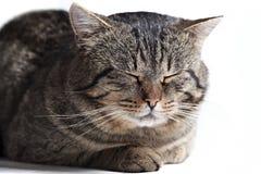 Sleeping cat isolated Stock Photo