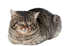 Sleeping cat isolated Royalty Free Stock Images