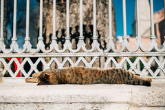Sleeping cat in Istanbul Stock Photography