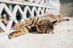 Sleeping cat in Istanbul Stock Images
