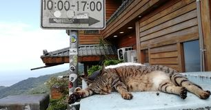 A sleeping cat in Jiufen royalty free stock image