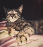 My cat is sleeping again royalty free stock image