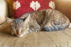 Sleeping cat kitten lying  sleeping on sofa soft chair Stock Photo