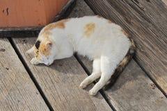 Sleeping cat. Lie on old wood floor Stock Photos