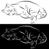Sleeping Cat Line Drawing Stock Image