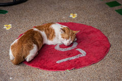 Sleeping cat on Love. Cat sleeps on round red rug with word Love Stock Photos
