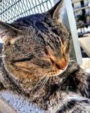 Sleeping Cat. Lovely sleeping cat Stock Images