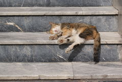 Sleeping cat on marble stairs of an apartment. tabby cat paws. Perspective stairs. marble stone texture background. noon sun. midday shadows. sunbathe at spring Royalty Free Stock Photo