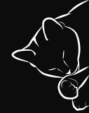 Sleeping cat. Muzzle with paws cute sleeping cat, vector illustration Royalty Free Stock Images