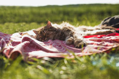 Sleeping cat in nature Royalty Free Stock Photography