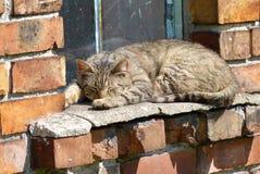 Sleeping cat. On the old windowsill stock images