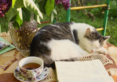 Sleeping cat with open book lilac in vase and tea cup Stock Images