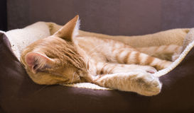 Sleeping cat Stock Photos
