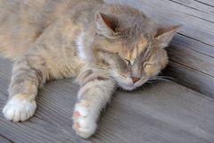 Sleeping cat on a outdoor wooden table royalty free stock images