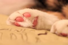 Cat paw. Sleeping cat paw close up stock photography