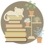 Sleeping cat on a pile of books Royalty Free Stock Image