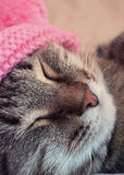 Sleeping cat in a pink hat Stock Photos